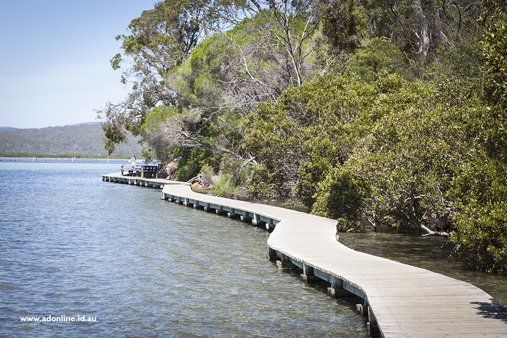 View of boardwalk with water on one side and trees on the other.