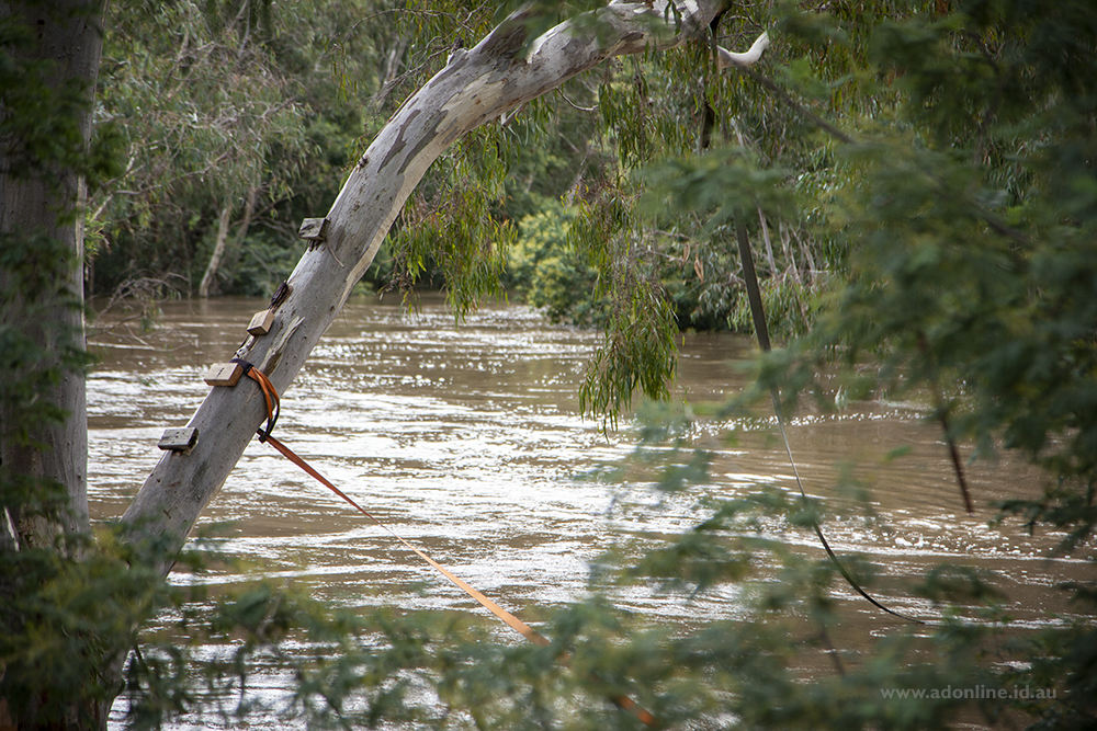 A tree with ropes hanging into a river which has submerged the swing.