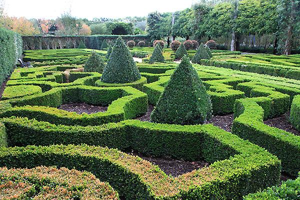 Alowyn gardens the grapevine for Parterre vegetable garden design