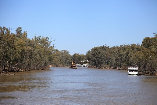 Looking along the Murray River