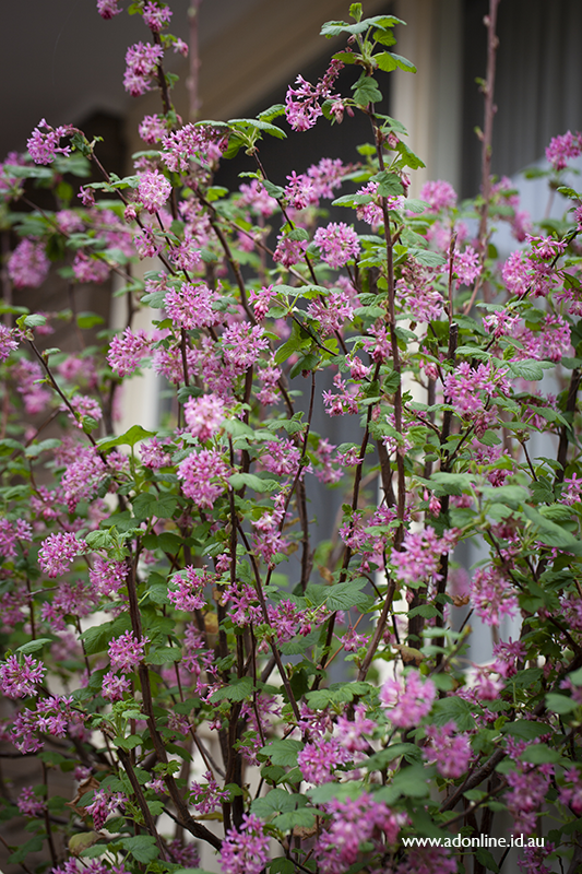 Foliage and flowers