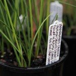 Handwritten plant tag on side of pot