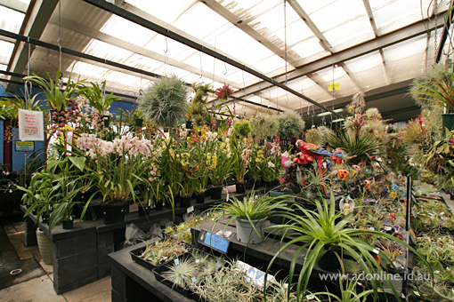 It S Pleasant To Walk The Aisles Looking At Beautiful Orchid Species Including Cymbidium Dendrobium And Phaelenopsis Collectors Corner Is A Serious