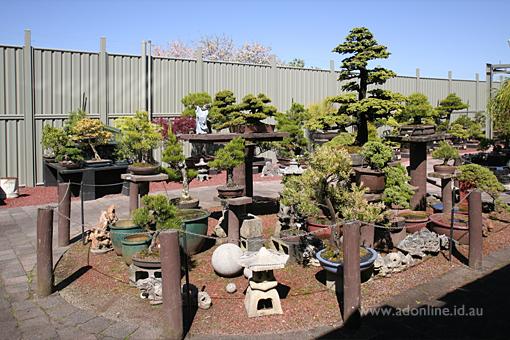Gardenworld The Grapevine